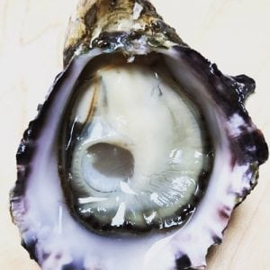 Kusshi-Oyster-Pic-2