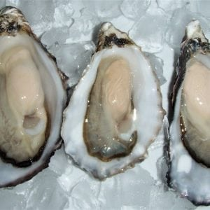 Pacific_Oysters