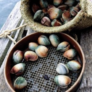 Clams – NZ Littlenecks