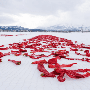 Red chilis strewn across snow in Japan
